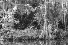 Cypress swamp by Tony Sweet on 500px