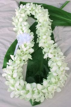 Fresh Orchid Leis – Fresh from Hawaii White Deluxe Orchid Fresh Hawaiian Leis Hawaiian Flowers, Tropical Flowers, Hawaiian Leis, Exotic Flowers, Purple Flowers, White Flowers, Flower Lei, Flower Garlands, Cactus Flower