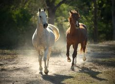 Horse Wallpaper and Background Image All The Pretty Horses, Beautiful Horses, Animals Beautiful, Horse Photos, Horse Pictures, Horse Girl, Horse Love, Horse Wallpaper, Horse Facts