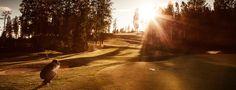 Hirsala Golf