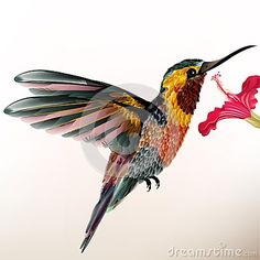 Bello colibrì variopinto con il fiore