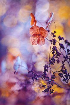 Et si dans notre monde de folie, nous revenions à l'essentiel : la fleur. Luxuriante, colorée, élancée, belle, libre... Sacrée, en un mot. Pour la célébrer, l'IGPOTY (International Garden Photographer Of The Year) organise chaque année au Royaume-Uni le plus beau concours de phot