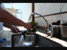 UTI para orquídeas - Salvando sua orquídea debilitada - YouTube