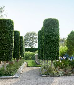 """Like living exclamation points, these trees punctuate the landscape with an elegant wit. Conway fashioned his allée from fastigiate hornbeams (Carpinus betulus 'Fastigiata'), which naturally tend toward a columnar shape. To keep them looking trim, he prunes the hardwoods with hedge clippers three to four times a season, from spring through fall — though it's hardly an exact science. """"Don't worry about mistakes,"""" Conway says. """"New shoots will appear in a few weeks, and you'll have another ..."""