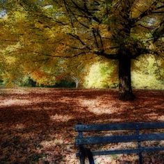 Cherokee Park ~ Louisville, KY <3  Spent many happy hours here