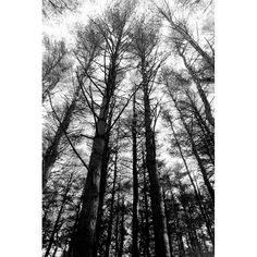 Hey, I found this really awesome Etsy listing at https://www.etsy.com/listing/564074922/winter-trees-photography-print-forest