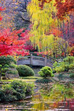 Garden and Moon #Bridge ☄#Beauty