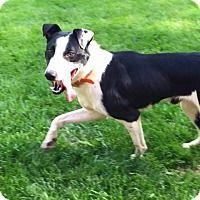 Adopt A Pet :: Kingston - Cincinnati, OH