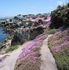 Pacific Grove, Monterey, California. Pretty place....would love to see the Monarch butterflies en masse