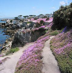 Pacific Grove, Monterey County, California