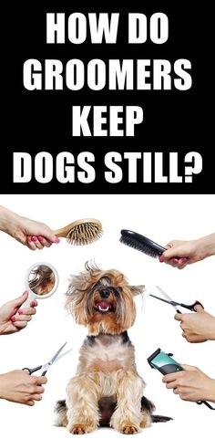Does your dog get stressed while getting groomed? Keeping a dog calm while being groomed is largely about making the dog feel secure. Here's 7 tips to reduce your dog's anxiety while grooming. Dog Grooming Tools, Dog Grooming Supplies, Poodle Grooming, Yorkie Dogs, Puppies, Dog Haircuts, Yorky, Dog Cleaning, Dog Nails