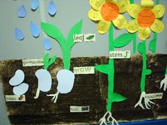 Planting and growing seeds classroom display photo – Photo gallery – SparkleBox - Modern School Displays, Classroom Displays, Classroom Tree, Future Classroom, Classroom Ideas, Preschool Science, Science Activities, Ks2 Science, Science Centers