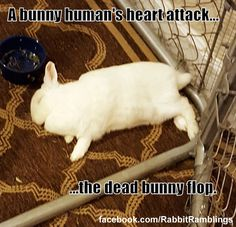 Guess I like to collect things. Here are some memes that have been found around the internet and perhaps been featured in a Rabbit Rambli. Bunny Paws, Cute Baby Bunnies, Funny Bunnies, Funny Animal Memes, Cute Funny Animals, Animal Humor, Dead Bunny, Bunny Meme, Bunny Quotes