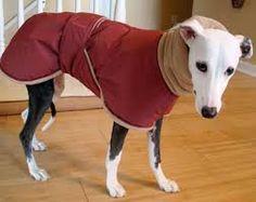 Image result for greyhound coat pattern