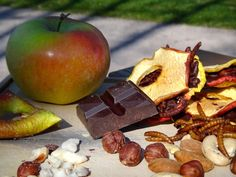 ABCD Ring with apples, nuts, dark chocolate and mealworms