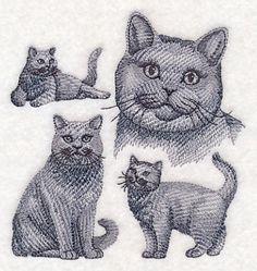 British Shorthair Sketch