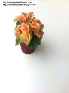 small poinsettia Sugar Flowers, Poinsettia, Plants, Mini, Christmas Poinsettia, Flora, Plant, Planting