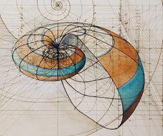 Venezuelan artist Rafael Araujo Calculated Shells