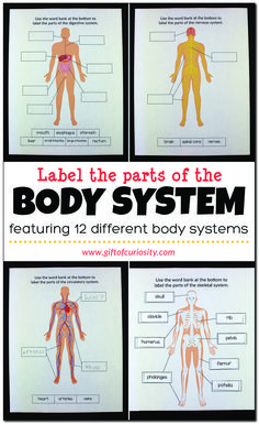 Label the Parts of the Human Body: These human body worksheets help children identify 12 major body systems and the important organs and parts in each system. Human Body Science, Human Body Activities, Human Body Unit, Human Body Systems, Organs Of Human Body, Science Lessons, Science Education, Science Activities, Health Education