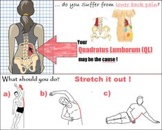 The Quadratus Lumborum (or QL for short) is a muscle that is often tight in those who suffer with lower back pain. Carrying your bag on one side, leaning on one elbow when sitting, favouring one leg too much when standing, sleeping on your side... ALL of these can lead to stiff QL. Best way to help it RELAX?... S..T..R..E..T..C..H it out!! Hold for at least 30 seconds. Repeat 3 times on each side.