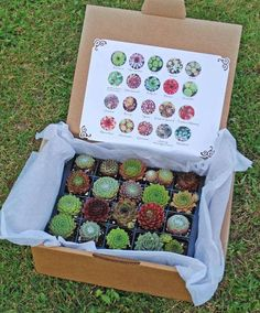 Instead of giving a box of chocolate, give a box of succulents!! Love it!