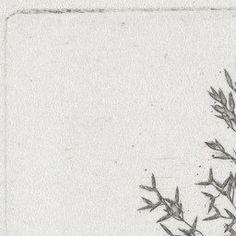 William Henry Fox Talbot. Wheat. c. 1854   MoMA