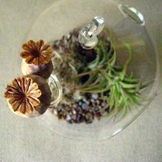 Poppy Pod Air Plant Terrarium by seaandasters on Etsy, $25.00