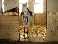 stáj Podkova   stáj Horses, Animals, Animales, Animaux, Animal, Animais, Horse