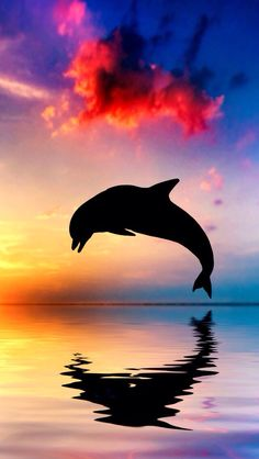 So pretty! #background #pretty #dolphin #sunset