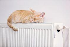 Homeplaza - Alte Heizkörperthermostatventile ersetzen, den Energieverbrauch senken - Gesagt, getan!