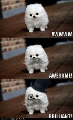 i hope to never own a small dog but if i do this will be what they look like 24/7. love this!