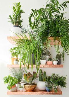 decorar con plantas 22