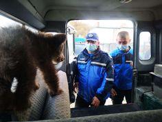 Jandarmii argeșeni au ajutat la salvarea a doi pui de urs