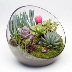 The Big Ol' Egg large glass DIY terrarium kit with 6 succulents