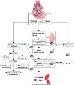 Pathophysiology Of Pulmonary Embolism Via McMaster Review Pathophysorg