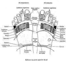 reflexologia36