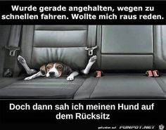 Hoasenda - Welcome my page Tierischer Humor, Man Humor, Daily Jokes, Good Jokes, Funny Dogs, Funny Animals, Image Facebook, Funny Cute, Hilarious