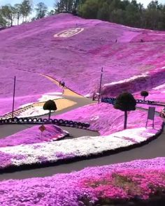 Sea of flowers in Hokkaido, Japan via w - Diy Crafts Projects DIY Videos Crafts Beautiful Places To Travel, Wonderful Places, Cool Places To Visit, Places To Go, Beautiful Things, Vacation Places, Dream Vacations, Places Around The World, Japan Travel