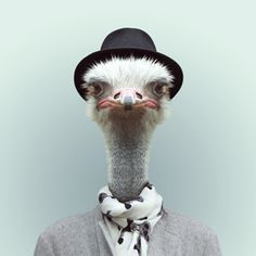 Zoo Portraits at Evermade.com