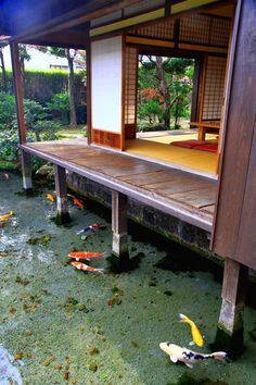 "Koi fish are the domesticated variety of common carp. Actually, the word ""koi"" comes from the Japanese word that means ""carp"". Outdoor koi ponds are relaxing. Garden Design, House Design, Fish Ponds, Koi Fish Pond, Water Features, Future House, Interior And Exterior, Beautiful Places, Beautiful Fish"