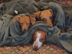 they love to burrow and snuggle (love how the little one is winking ;-)