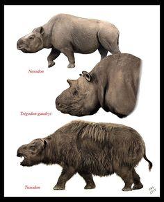 Nesodon, Trigodon and Toxodon, all mammals of the Miocene, late Pliocene and Pleistocene epochs from about 2.6 million to 16,500 years ago.   Nesodon was of the late Oligocene to Miocene epochs.