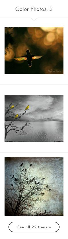 """Color Photos, 2"" by christined1960 ❤ liked on Polyvore featuring home, home decor, wall art, photography wall art, giclee wall art, photographic wall art, hummingbird wall art, angel wall art, yellow home decor and black white home decor"
