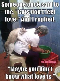 If you can't love a cat you probably can't love anyone