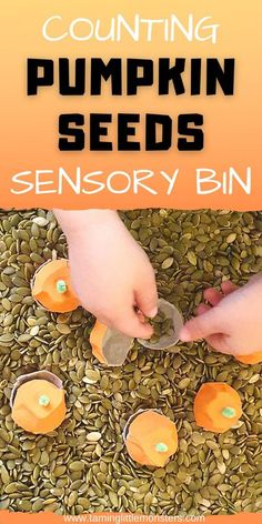 Learn how to make a Fall sensory bin that will also teach your preschoolers about counting pumpkin seeds. This sensory bin will help to develop fine motor skills, language and math, all while your kids play. #fall #autumn #sensory #fine motor #math #preschooler #toddler Sensory Activities For Preschoolers, Autumn Activities For Kids, Gross Motor Activities, Preschool Learning Activities, Halloween Activities, Toddler Activities, Preschool Classroom, Summer Activities, Classroom Ideas