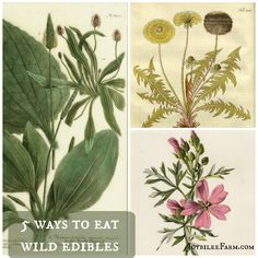 5 ways to eat wild edibles