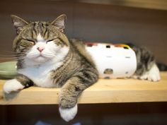 Maru:[This box becomes the bellyband, too.] 10/8, 5-5 私信