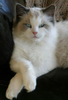 classy cat, just chilln