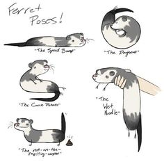 You have no idea how funny this is if you've never owned a ferret