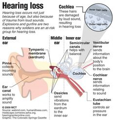 Hearing & the auditory system- learn more about hearing health at Zounds Hearing Aids Bluffton- proudly serving Bluffton, Hilton Head, and Beaufort SC for all your hearing aid needs.